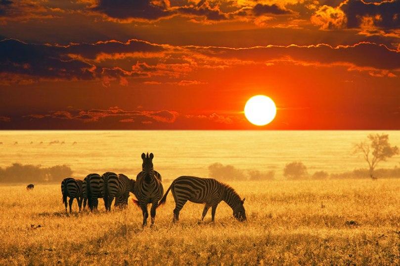 ftd-zebras-sol-africa.jpg