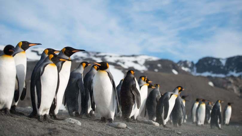 pinguins_andando_em_fila_974aebe4bcfbb1f0c3c04ed155e1f179_1 (21).jpg